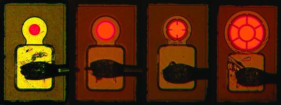 Jenoptik Sparte Optische Systeme Mit Neuentwicklungen Zur