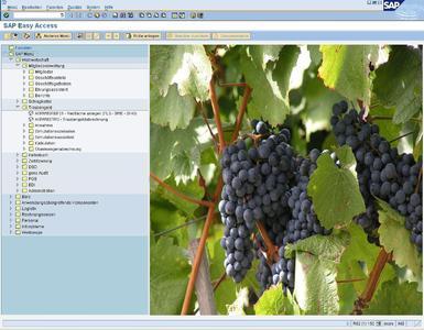 vineaA1 und vineaA1plus, die SAP Business All-in-One-Lösungen für die Weinwirtschaft, decken alle Anforderungen von Weinproduzenten und -händlern - privaten Winzern und Genossenschaften genauso wie Kellereien - ab: von der Rebflächenverwaltung und der Abrechnung des Traubengeldes bis zum Kellerbuch. Speziell für Weinbaugenossenschaften ist eine Mitgliederverwaltung integriert.