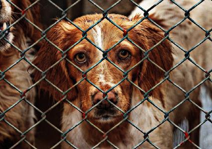Nicht nur Menschen, sondern zum Beispiel auch Tiere in Tierheimen profitieren von Charity