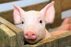 Fleischmarkt: private Lagerhaltung ab Januar 2016?