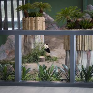 Die Balustrade am Panda-Gehege ist mit dem Antireflexionsglas Pilkington OptiView™ Ultra T Protect ausgestattet und bietet so gleichzeitig Sicherheit und eine uneingeschränkte Durchsicht