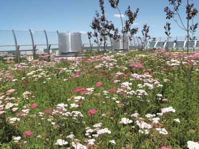 "The full range of simple intensive greening is possible using the ""Summer Plains"" system with a substrate depth of only 10 cm: whether it's blossoming perennials, herbs or dwarf shrubs"