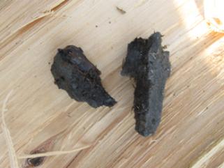 Granatsplitter, die in einem Holzstamm gefunden wurden.