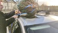 Weihnachtsbaumtransport