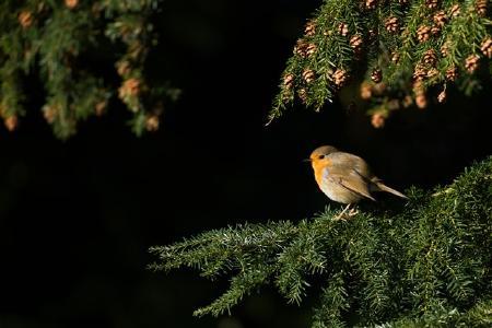Biodiversität im Wald