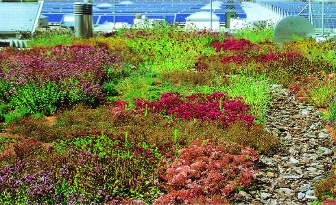 """The """"Irrigated Extensive Green Roof"""" is even necessary for lush plant growth in certain areas of Germany due to the long dry periods there."""