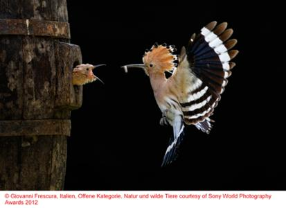 Copyright Giovanni Frescura, Italy, Open, Natur und wilde Tiere courtesy of Sony World Photography Awards 2012