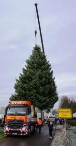 Weihnachtsbaum: 15 Meter hohe Coloradotanne aus Thüringen auf dem Weg zum Brandenburger Tor