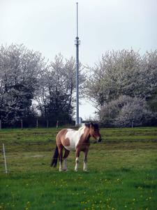 Bild 4: WLAN auf der Weide