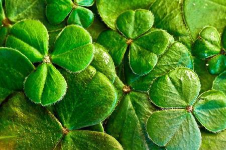 One of Ireland's symbols...