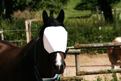 Eye protection for animals
