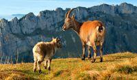 """""""Hast du schon gehört: Die neuen Swiss-Domains ranken bei Schweiz-Themen besser als andere Domains"""""""