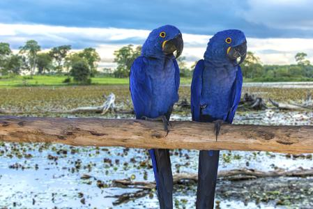 Farbenfrohe Blütenpflanzen und Tiere bieten Anreize für außergewöhnliche Aufnahmen
