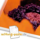 www.achtung-poster.de