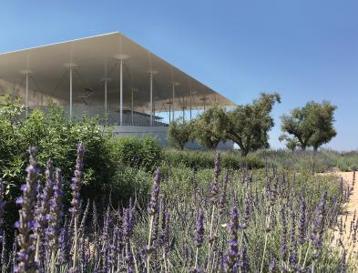 Lavender and olive trees are the main mediterranean vegetation on the car park roof / Source: H. Pangalou and Associates Landscape Architects