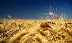 Asiatische Länder dominieren die Kundenliste für ukrainischen Weizen