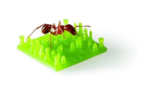 Ameise auf MicroFine Green Schachbrett