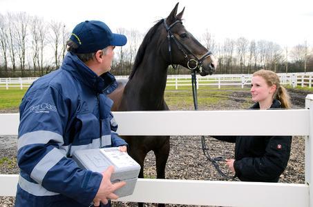 Night Star Express startet Wochenendservice für Pferdezüchter