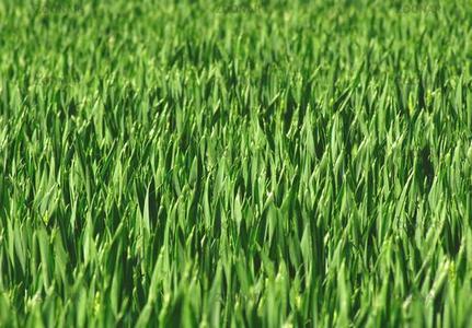 Aussichten für EU-Getreideernte meist gut