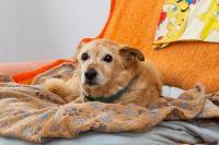 Frido gehört zu den Seniorenhunden, die ihren Lebensabend im Tierheim in Dorf Mecklenburg verbringen. Foto: WEMAG/Stephan Rudolph-Kramer