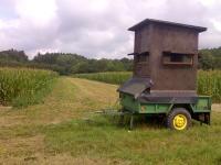 Jagdschneisen (hier im Mais) erleichtern die Jagd in allen Feldkulturen  wie etwa Raps und Weizen (Quelle: DJV)