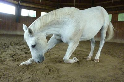 Horse-Domains: Internetadresse für eine breite Gruppe von Pferdeliebhabern