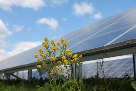 Der Solarpark Ernsthof bei Wertheim: Zwischen den Solarmodulen sind Lebensräume für Tiere und Pflanzen entstanden.