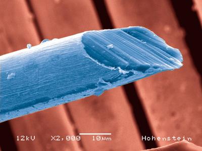 REM-Aufnahme einer Textilfaser, auf  die Nanopartikel aufgebracht wurde, um den UV-Schutzfaktor zu erhöhen