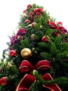 Weihnachtsbaum Nadeln.Leise Rieseln Die Nadeln Tipps Für Den Weihnachtsbaum Kauf Und