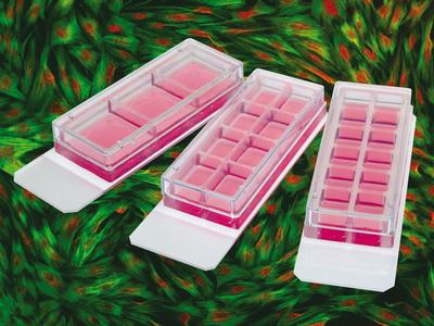 ibidi Product News: ibidi Offers New 3 Well and 8 Well Removable Chamber Slides for Immunofluorescence Assays
