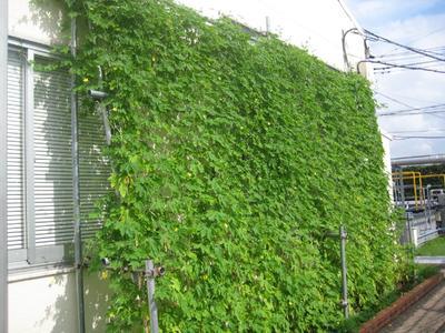 Kyocera Green Curtain Window