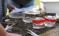 Untersuchung von Makrozoobenthos zur Gewässergütebestimmung / Bild: HFR