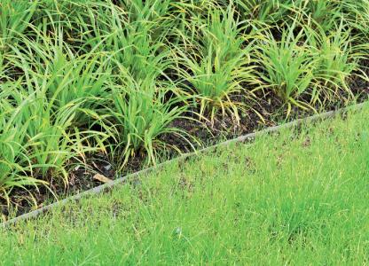 Die Beeteinfassungen sind in den angelegten Beeten kaum noch auszumachen und stehen somit dezent hinter der Bepflanzung zurück