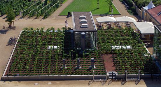 Auf dem sächsischen Staatsweingut Schloss Wackerbarth wächst ein Teil der Weinreben auch auf dem Dach, Quelle: ZinCo