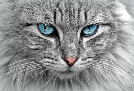 Hunde haben Herrchen, Katzen haben Personal...