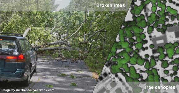 Von umgestürzten Bäumen versperrte Straße