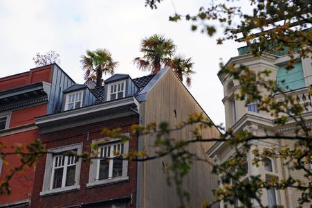 Eine Bepflanzung des Hausdachs mit dekorativen Palmen ist sicherlich nicht jedem Mieter gestattet
