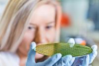 TU Ilmenau erforscht intelligente Werkstoffe für biologisch inspirierte Elektronik (© TU Ilmenau/Christoph Gorke)