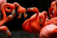 Die schönen Flamingos aus Kolumbien sind nicht für ein Domainhack geeignet, aber der Flamenco!