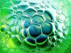 Microalgae producing oils can be converted into biodiesel, thus promising a viable fuel to help solve the global energy crisis.