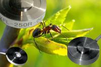 disynet - der Spezialist für Ultra-Miniaturkraftaufnehmer