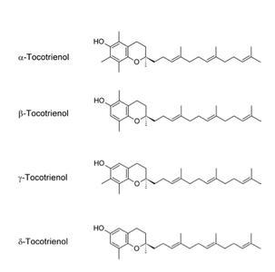 Fig. 3 Die Tocotrienolisomere besitzen ein noch deutlich höheres antioxidatives Potential als die korrespondierendenTocopherole, die Bioverfügbarkeit ist dagegen geringer.