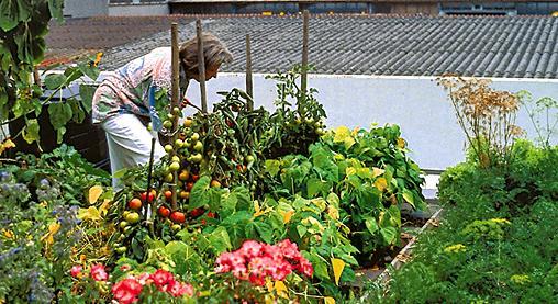 Die Inhaber dieses privaten Dachgartens in Wendlingen holen sich ihre frischen Tomaten direkt auf das Teller, Quelle: ZinCo