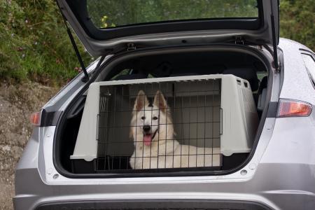 Transport von Tieren im Auto (Foto: Marcella Miriello/Shutterstock)