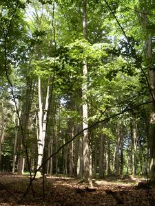 Gemeinsam wollen Hertz und Piepenbrock im Frühjahr eigenhändig Bäume im Piepenbrock Forst setzen.