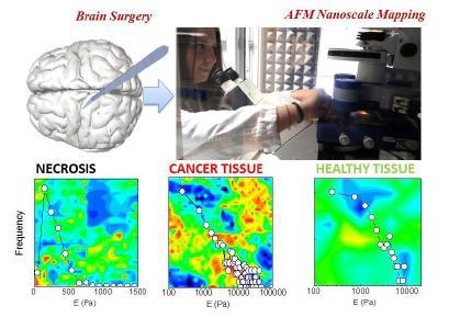 """Beispiele von """"Modulus vs Frequency""""-Maps an Zellgewebe, gemessen mit dem JPK NanoWizard® und dem CellHesion®-Modul"""