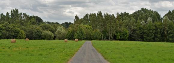 Hinter einer dichten Baumkette verborgen, entzieht sich das idyllisch gelegene Anwesen flüchtigen Blicken. Foto: Achim Zielke
