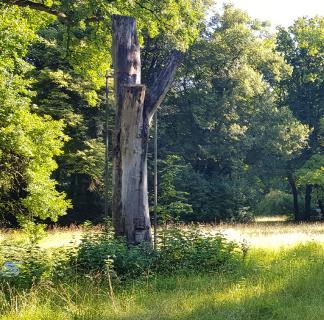 Der kohlenstoffbasierte Werkstoff Carbon leistet wertvolle Beiträge zu Natur- und Artenschutz, hier etwa als Stütze einer alten Buche im Augsburger Siebentischwald