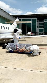 Aufwändiger Flugzeugtransport eines Corona-Patienten
