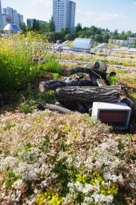 """The """"Biodiversity Green Roof"""" maximises the biodiversity of fauna and flora on the roof, thanks to substrate accumulation and design using """"dead wood"""", stones and much more .... Source: Ahner"""